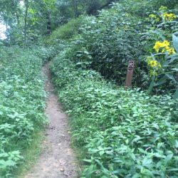 hiking trail surrounded by green bushes