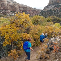 people hiking through a canyon