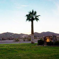 Palm tree in the desert