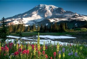 Mt Rainier with wildflowers and snow capped mountain