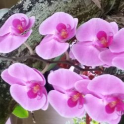 Hawaiian flowers on Kauai