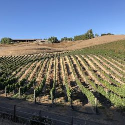 Cycling past california vineyards in the Santa Ynez valley