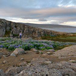 Holmavik Vista in Iceland