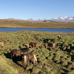 Husafell hike in Iceland with horses