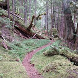 Thunder Creek Trail in North Cascades National Park