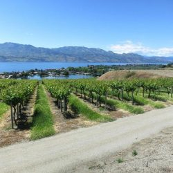 Vineyards along the Columbia River Gorge