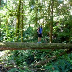 A hiker on a fallen tree in Olympic National Park