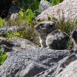 small animal on a hike