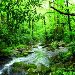 river surrounded by green trees
