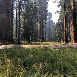 Forest in Sequoia National Park