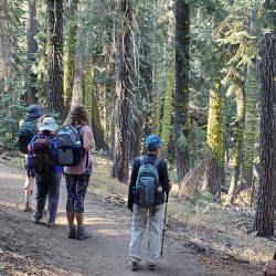 Hikers by mossy trees in Sequoia
