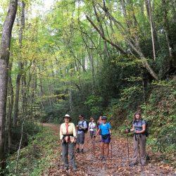 green covered hiking trail