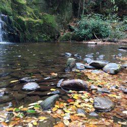 stream in nature