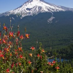 Columbine and Mt. Hood from summit of Tom, Dick & Harry