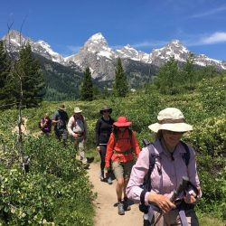Hiking with Timberline Adventures at Yellowstone and Grand Teton National Parks in the summer, snow capped mountains and flowers in the field