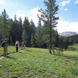 Field in Yosemite National Park