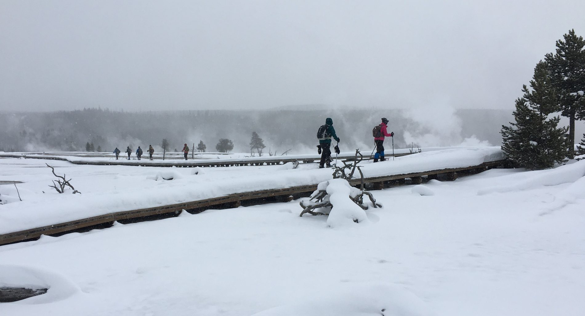 Biscuit Basin boardwalk on snowshoes in Yellowstone National Park