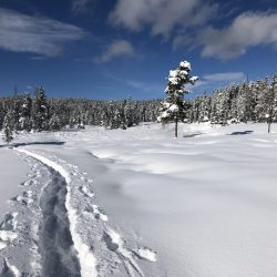 Snowshoe trail in the meadows of Flagg Ranch Yellowstone country