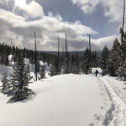 Snowshoe on Mallard Lake Trail Yellowstone National Park