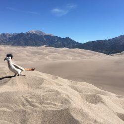 Desert bird on the sand dunes
