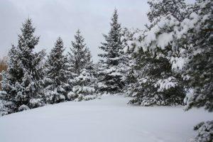 outdoor winter snow trees