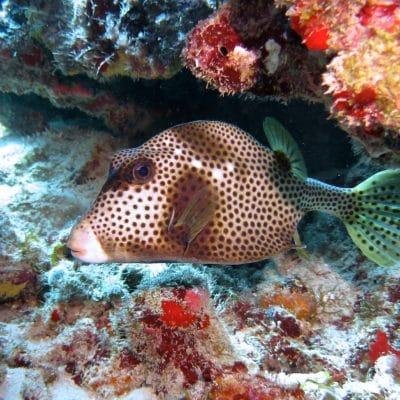 photo of fish in the virgin islands